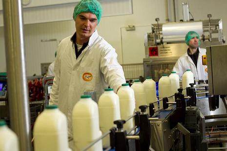 Milk being bottled