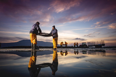 Rooney Fish Director Andrew Rooney and Manager Patrick Higgins on the Millbay Oyster farm