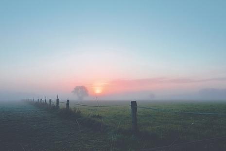 Mist on a field