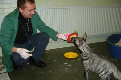 Andrew Bieniek-Maluszczak and hyena