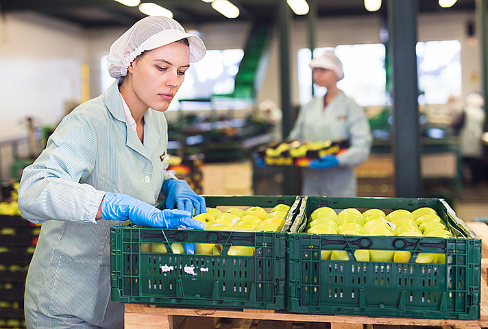 Workers packing fruit in warehouse