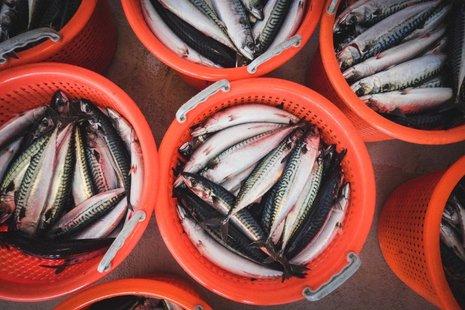 Orange basket full of mackerel