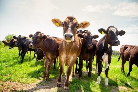 Bovine TB vaccine field trials