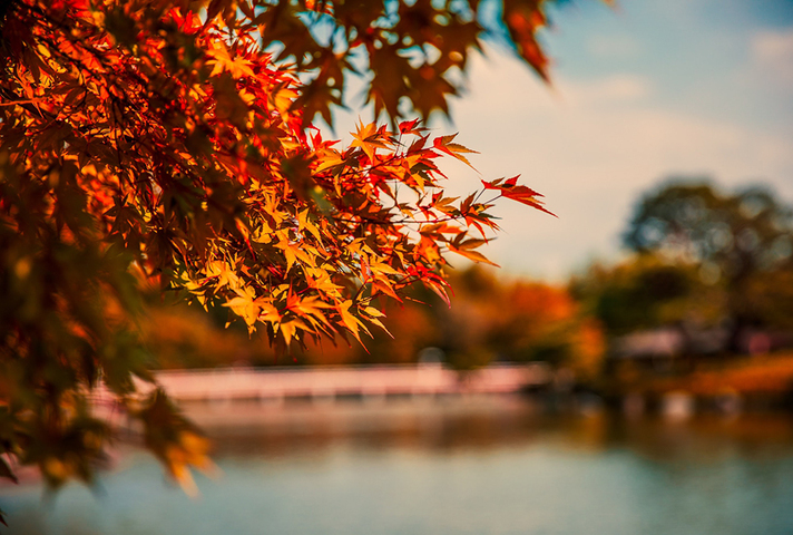 Autumnal leaves on a tree in front of an out-of-focus lake in the background