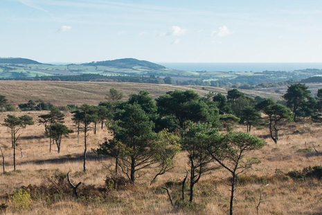 Heathland with grasses and trees with the sea in the background