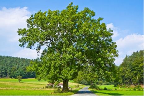 A photo of a tree