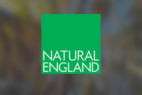 Green Natural England logo with white words