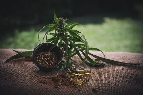 CBD oil capsules and cannabis plant