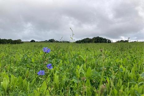 grassland buffer strip