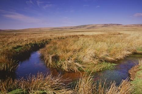 Image of Dartmoor National Park peatlands with river