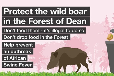 Protect the wild boar in the Forest of Dean from African swine fever. Don't feed them and don't drop food.