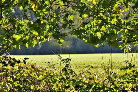 An image of trees, vegetation and a field in the background.