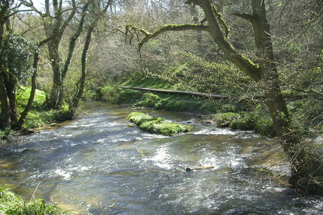 Riverbanks and watercourses image