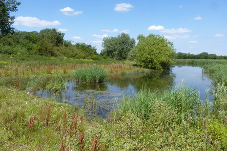 Lake at Cotswold Water Park