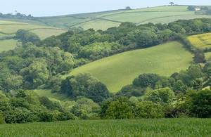 Rolling hills separated by hedgerows