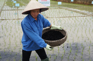 Luong fertilising her field with biochar. Picture: Nguyen Hoang Ha/DFID
