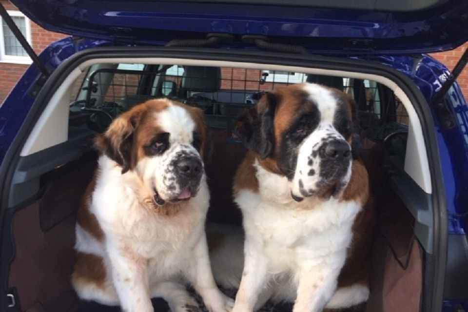 Bertie and Jill - dogs in car
