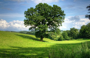 A large tree in a green field.