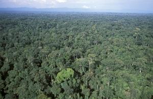 A tropical rainforest