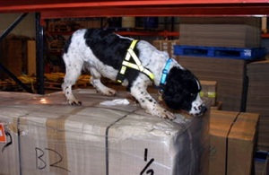 Sniffer Dog with cargo