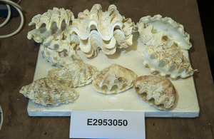 A Manchester man has been jailed for attempting to smuggle corals and clams through Manchester Airport.