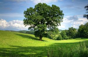 A tree in a field.