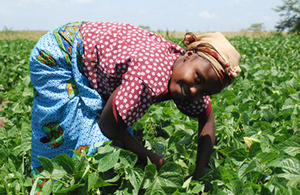 Mary Nambura, bean picker, Kenya. Picture: Green Shoots Productions