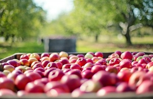 Crate of red apples
