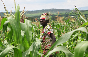 Farmer in maize field in Nyagatare, Rwanda's Eastern Province