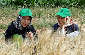 Barley farmers discuss crop traits during a conference field trip