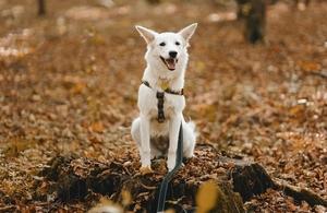 dog sitting in a wood
