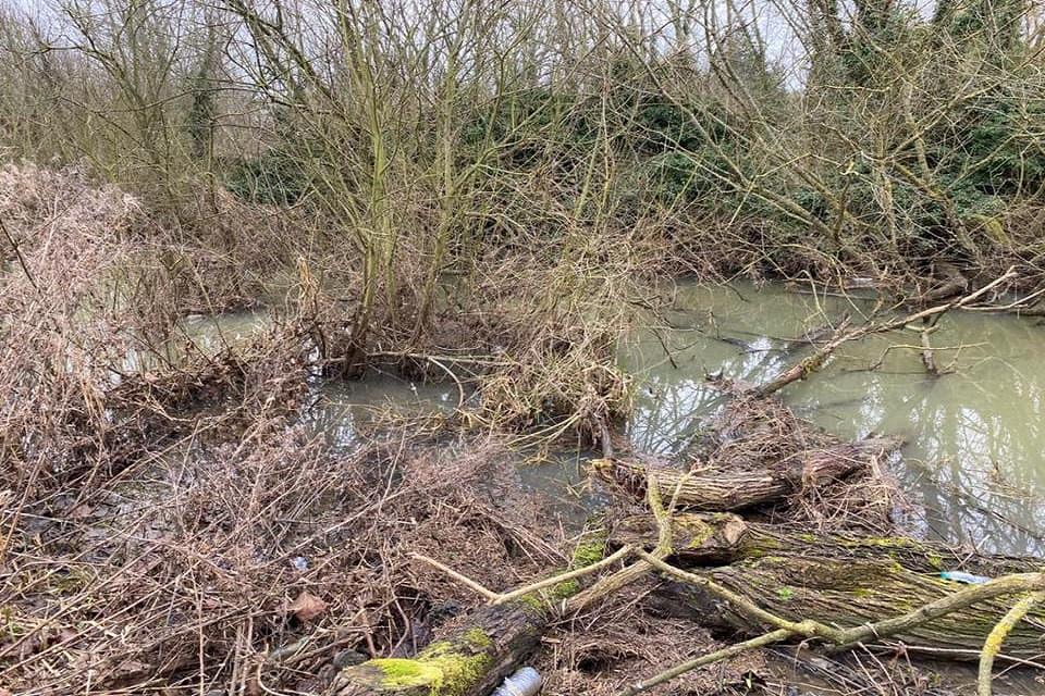 Overgrown vegetation covering a section of the river, the picture was taken before the partnership project.