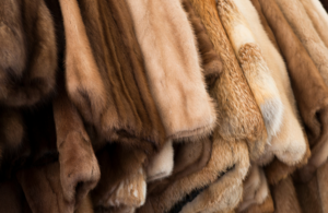 A photo of fur coats on a clothes rail