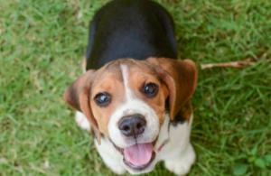 A photo of a puppy in a field