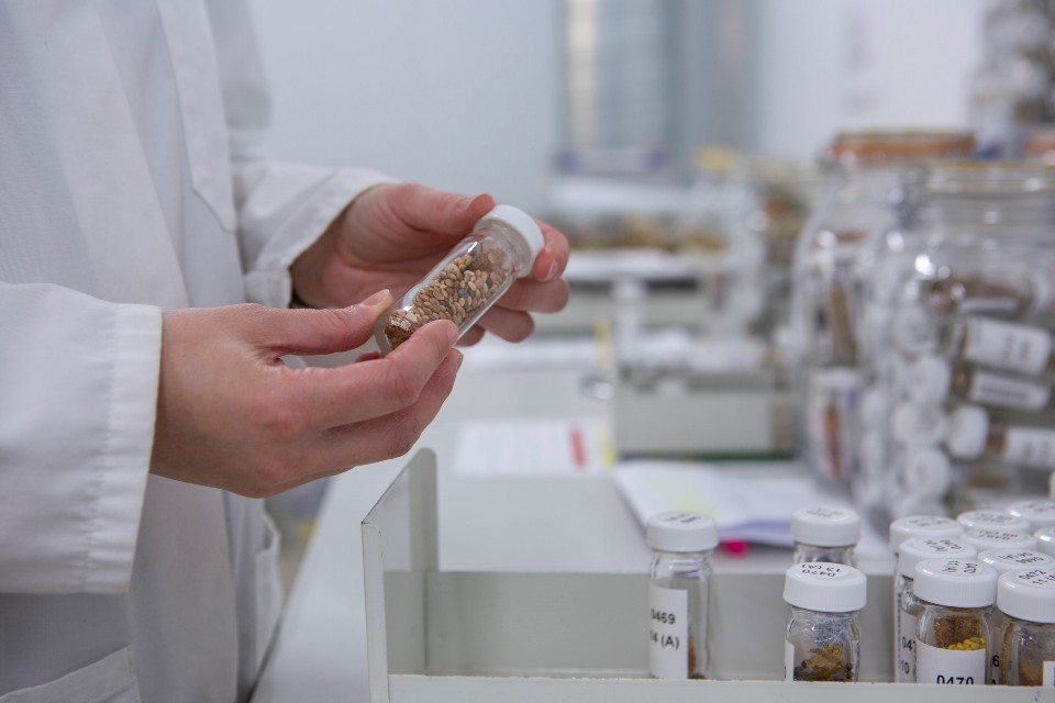 A scientist holding a test tube that has seeds in it.