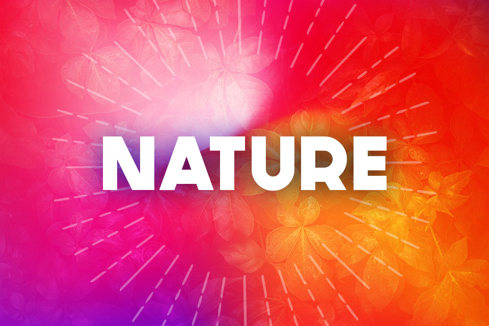 Nature header image for rediscover summer guide