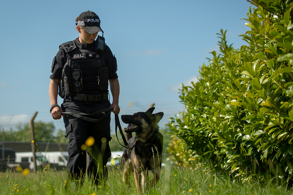 MDP police dog and handler patrolling outdoors.