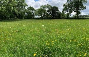 На изображении показан уголок поля в летнее время, полный полевых цветов, окруженный живой изгородью и деревьями.