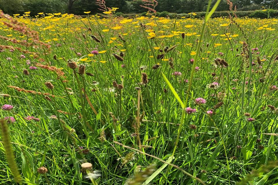 На изображении крупным планом показаны луга, усеянные полевыми цветами.