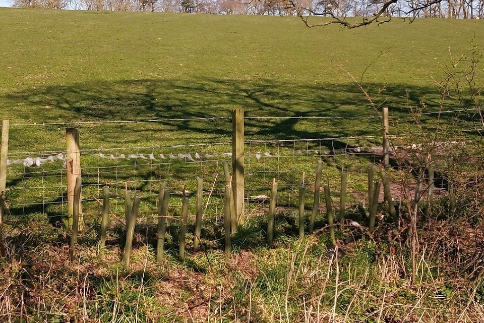 Image shows new trees planted in the Upper Ouseburn catchment