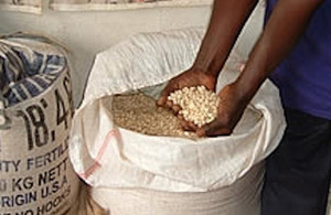 Seeds. Small and medium-sized seed companies are supported by SODP