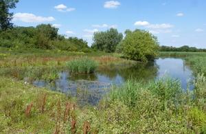 Небольшое озеро в окружении зеленой растительности.