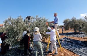 Великобритания и партнеры присоединяются к палестинским фермерам в сборе оливок