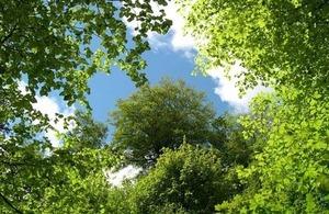 Tree and plant health biodiversity summit