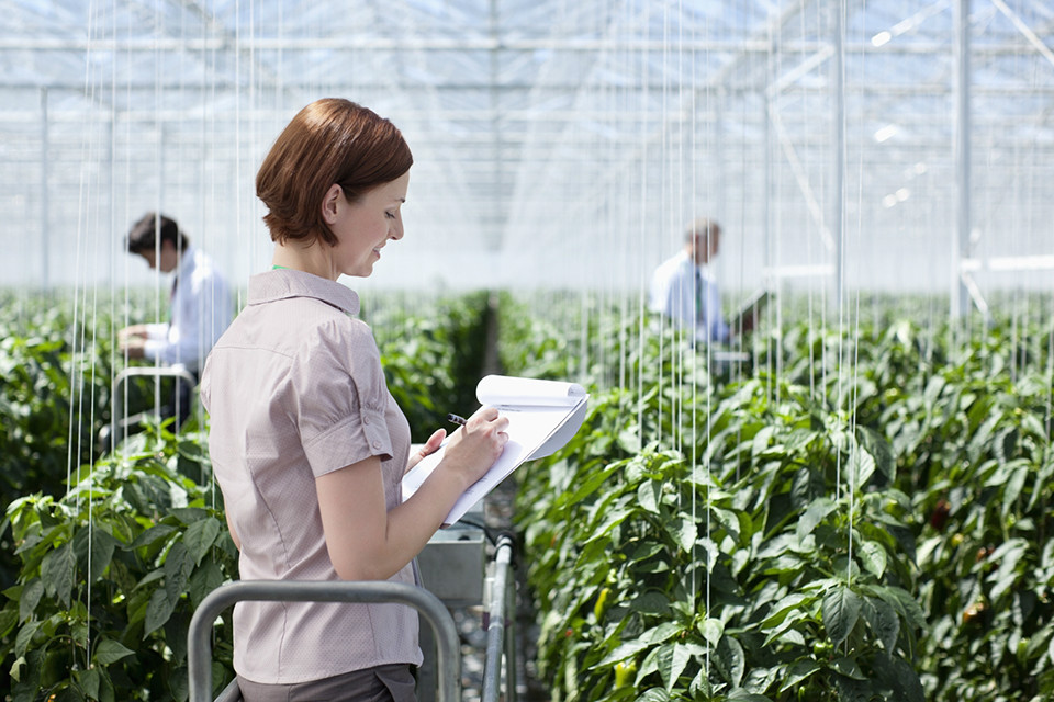 Woman with clipboard, surrounded by plants in a commercial greenhouse