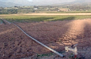 Most Western Cape fruit production is under irrigation