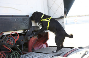 Border Force sniffer dogs in action