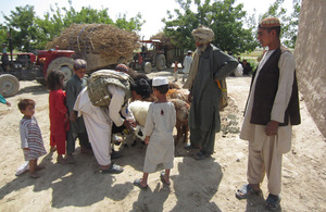 Afghan paramedic vet Jama Gul tends to a local farmer's animals