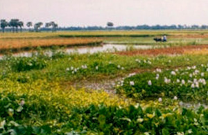 The Goakhola-Beel floodplains