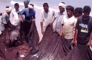 Beach Seine net fishers in Andhra Pradesh, India